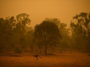 Avustralya'da bilançosu ağırlaşıyor: 25 ölü