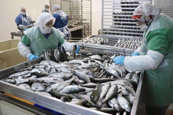 Avrupa, denizsiz Denizli'nin balığını yiyor galerisi resim 7