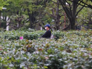 Parklara gidilmesin diye çiçeklere kıydılar