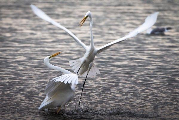 Yılın fotoğrafı: Karabatak ve Pelikan galerisi resim 10