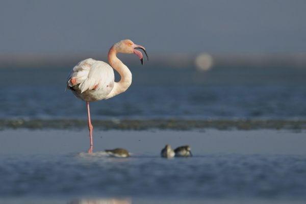 Yılın fotoğrafı: Karabatak ve Pelikan galerisi resim 2