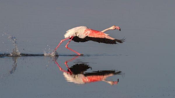 Yılın fotoğrafı: Karabatak ve Pelikan galerisi resim 7