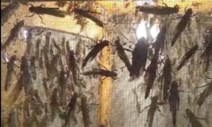 Türkiye'den Almaya'ya hamam böceği, kurtçuk satıyor galerisi resim 5