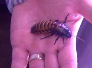 Türkiye'den Almaya'ya hamam böceği, kurtçuk satıyor galerisi resim 8