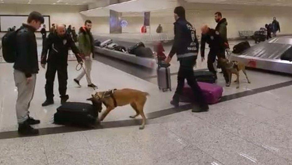 Hollandalı turistler köpekle arandı galerisi resim 4