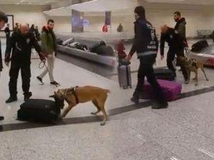 Hollandalı turistler köpekle arandı