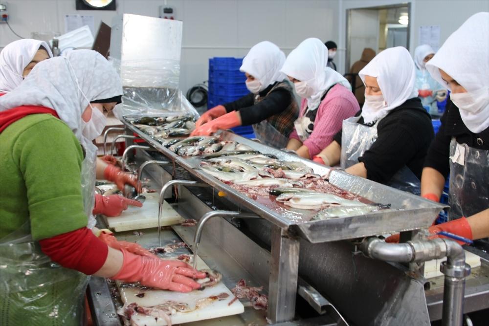 Konya'dan 15 ülkeye balık ihraç ediyor galerisi resim 1