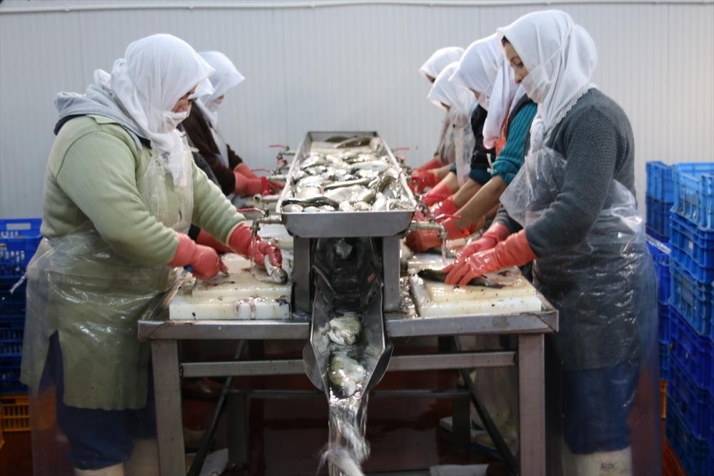 Konya'dan 15 ülkeye balık ihraç ediyor galerisi resim 2