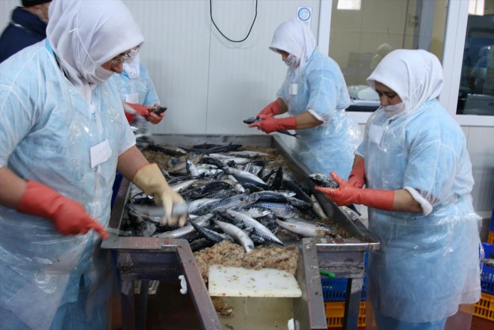 Konya'dan 15 ülkeye balık ihraç ediyor galerisi resim 3