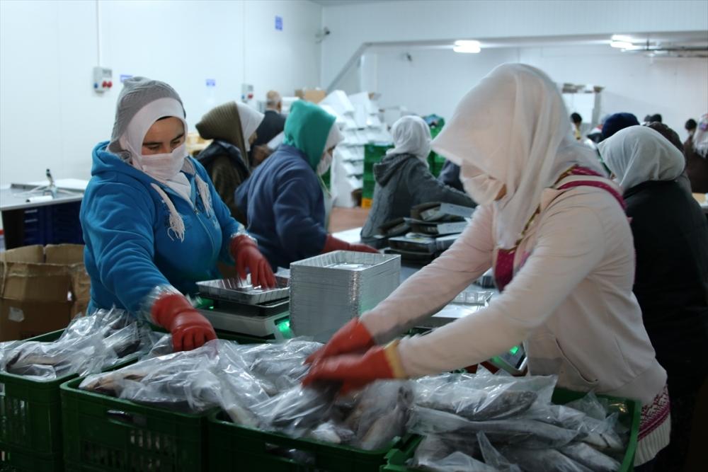 Konya'dan 15 ülkeye balık ihraç ediyor galerisi resim 4