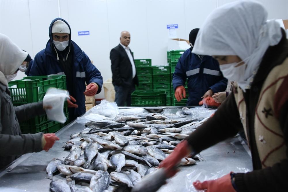Konya'dan 15 ülkeye balık ihraç ediyor galerisi resim 5
