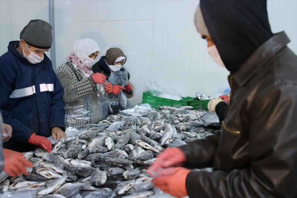 Konya'dan 15 ülkeye balık ihraç ediyor galerisi resim 6