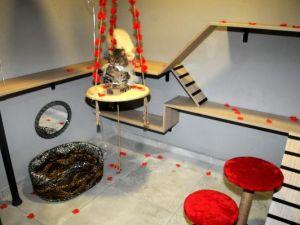 Balayı odalı kedi oteli