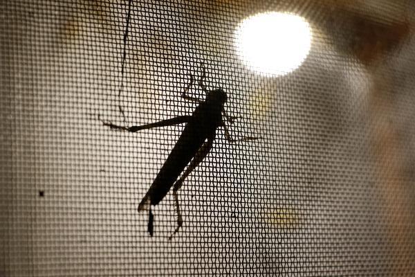 10 sene içinde böcek yiyenlerin sayısı artacak galerisi resim 2