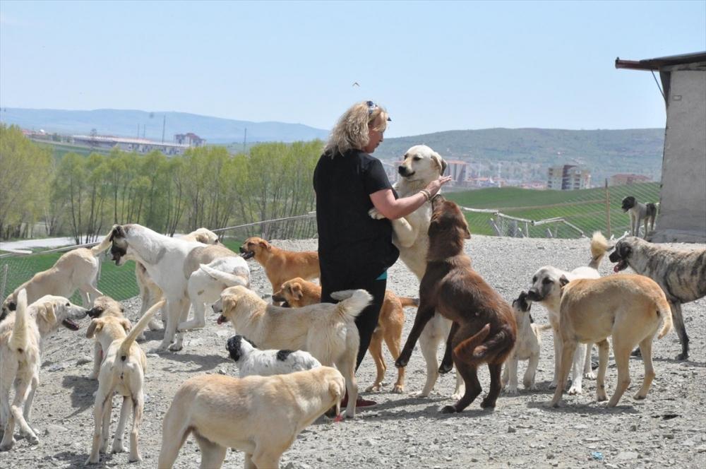 Gurbetçiden memleketine köpek barınağı galerisi resim 1