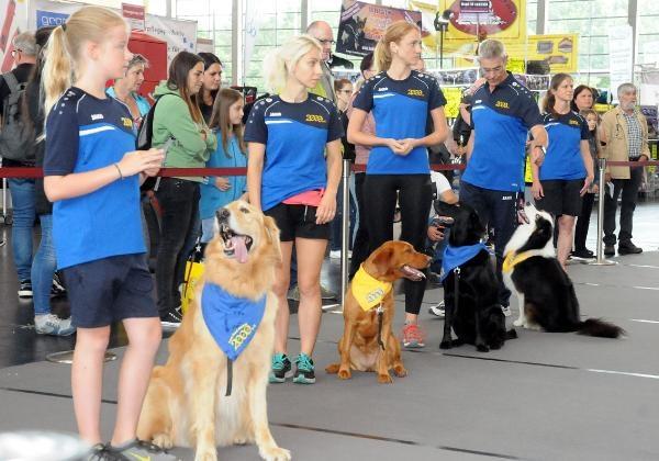 Almanya'da 4 bin köpek güzellikte yarıştı galerisi resim 1