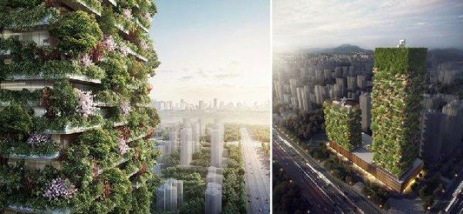 Çin'de hava kirliliğine karşı 'orman gökdelenler'