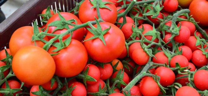 Rusya'dan Türkiye'ye domates tepkisi