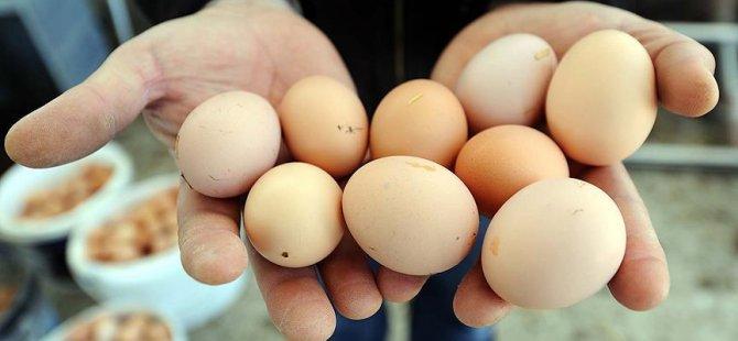 Zehirli yumurta krizi Avrupa'ya yayıldı