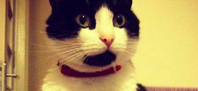 THY uçağına verilen kedi, 1 gün sonra apronda bulundu