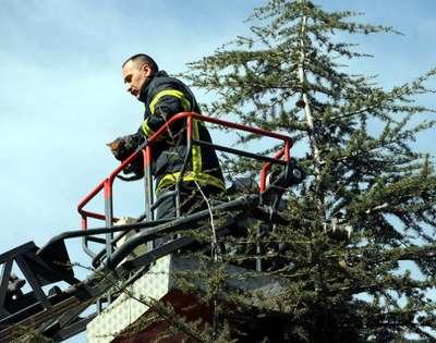 Ağaçta mahsur kalan 2 yavru kediyi itfaiye kurtardı