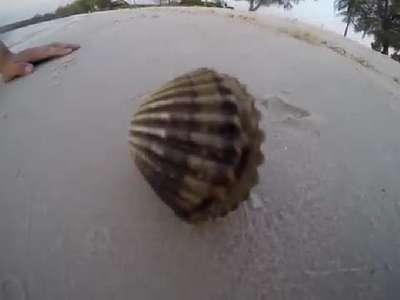 Deniz kabuğunun içinden çıkanı görünce gözlerine inanamadı