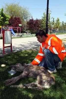 Hasta köpeğe yardım eli