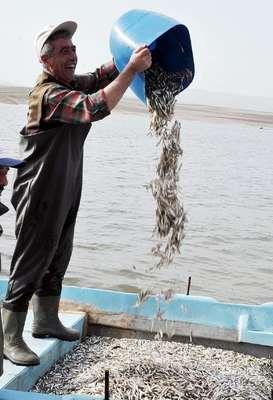 Yozgat'tan Avrupa'ya balık ihracaatı