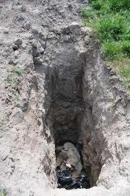 Eskişehir'de toplu hayvan mezarlığı