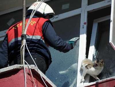Pencereye sıkışan kediyi itafiye kurtardı