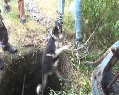 Kuyuya düşen köpeği itfaiye kurtardı - ek fotoğraflar