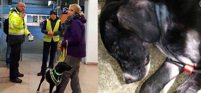 Marmaris'te sokak köpeğiydi, Almanya'da güvenlik oldu
