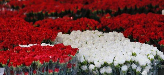 İngilizler sevgililerine Türk karanfili verdi
