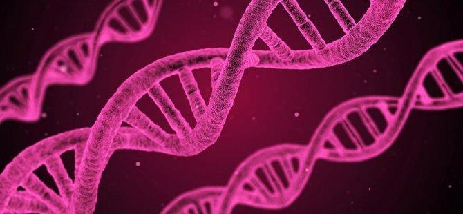 Tarihi yeniden yazan antik DNA bulundu