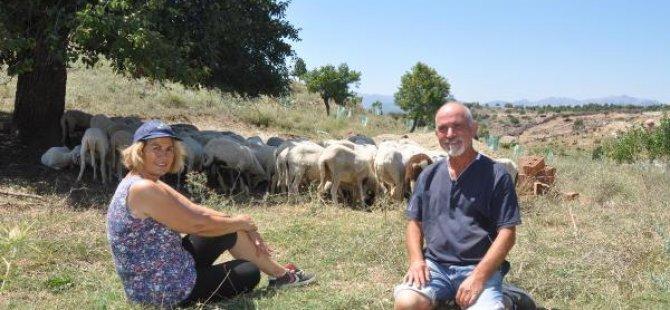 Gurbetçi çift Türkiye'de hayvancılığa başladı