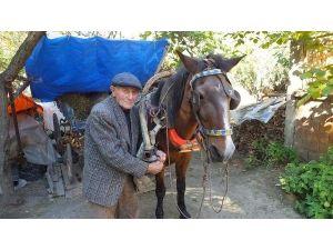 91 yaşında tarla sürüyor