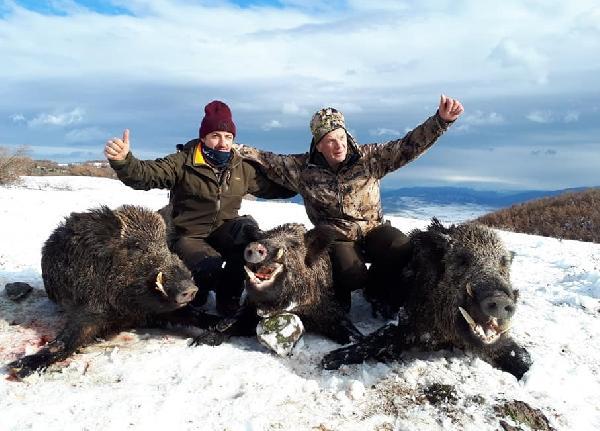 Almanlar Türkiye'ye domuz avına geldi