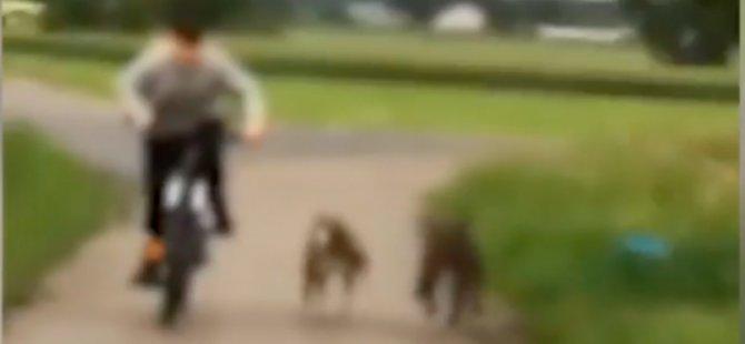 Almanya'da köpekler çocuğa saldırdı