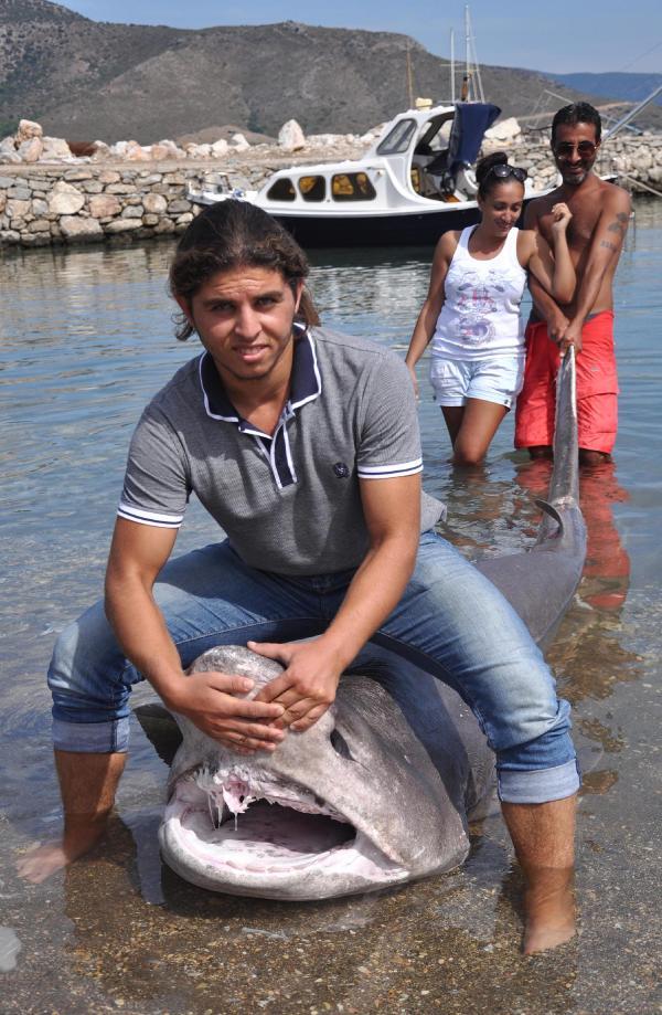 Datça'da ölü köpekbalığı sahile vurdu