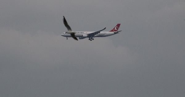 Ek fotoğraf/ Martı sürüleri de pilotları tedirgin ediyor