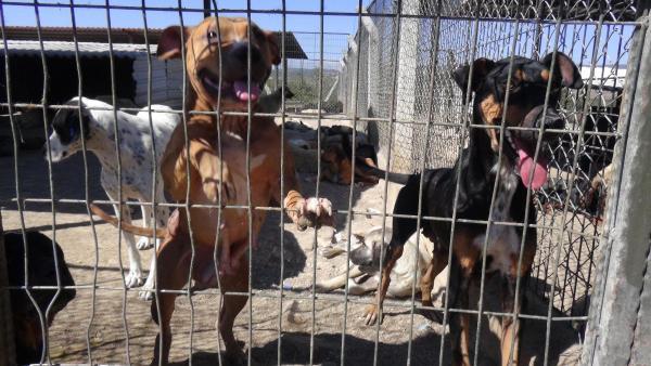 Nebahat Avcu: Uşak'ta kaybolan 300 köpeğin akıbeti ne oldu?