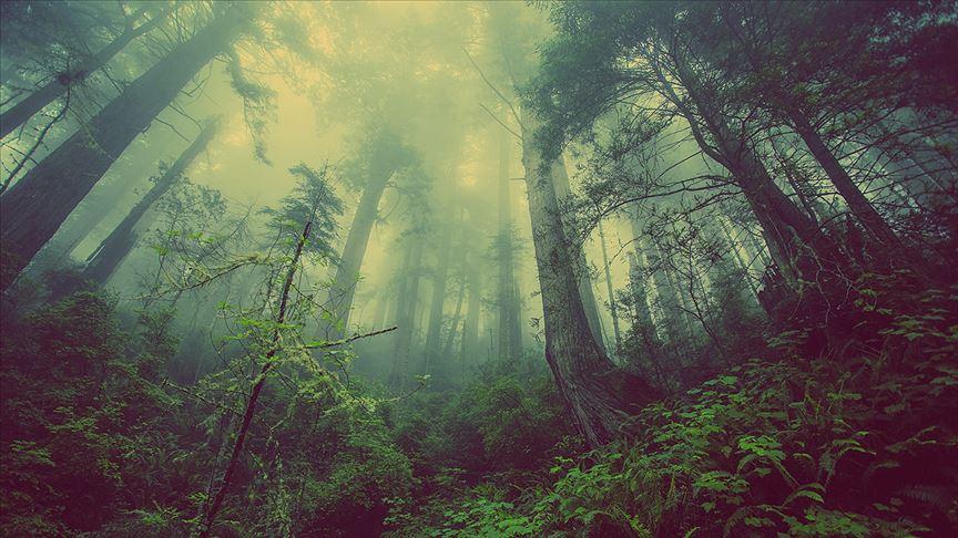 Tahrip edilen orman alanıyüzde 88,4 arttı