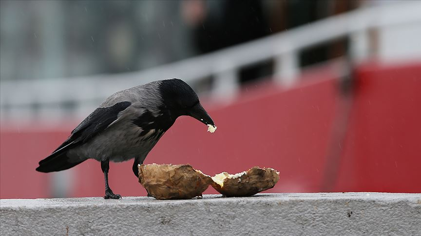 Fast food kargaların da kolesterolünü yükseltti