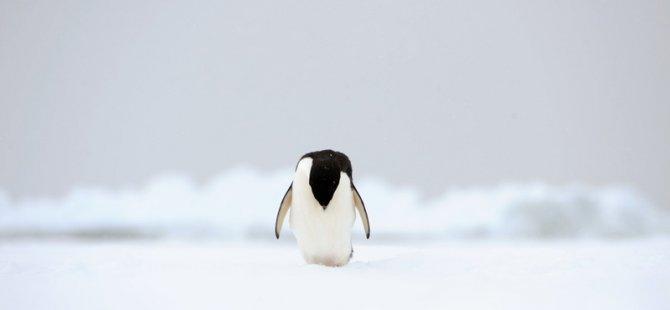 Antarktika'da sıcaklık 20.7 dereceye yükseldi