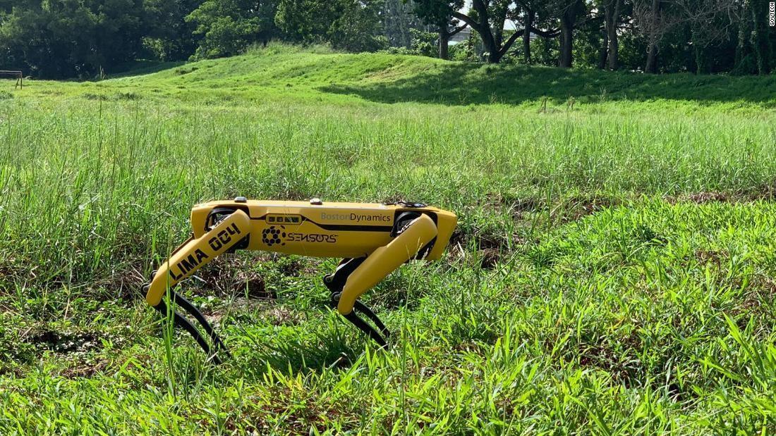 """Koronaya karşı """"robot köpek"""" önlemi"""