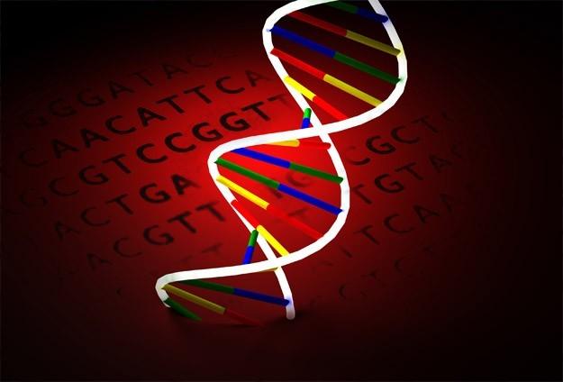 Eski Belçika kralına DNA testi şoku
