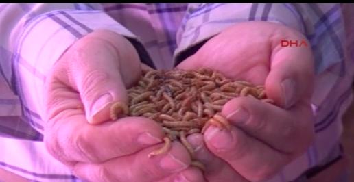 Türkiye'den Almaya'ya hamam böceği, kurtçuk satıyor