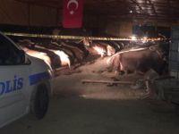 Kurban pazarında silahlı kavga: 3 ölü