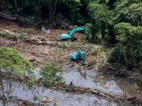 Greenpeace: Almanya kadar yağmur ormanı yok edildi