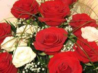 Pasta ve çiçeğe 545 milyon lira